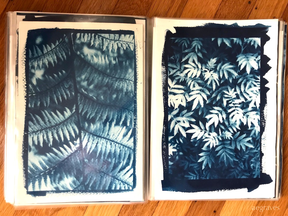Image of a portfolio with two cyanotypes