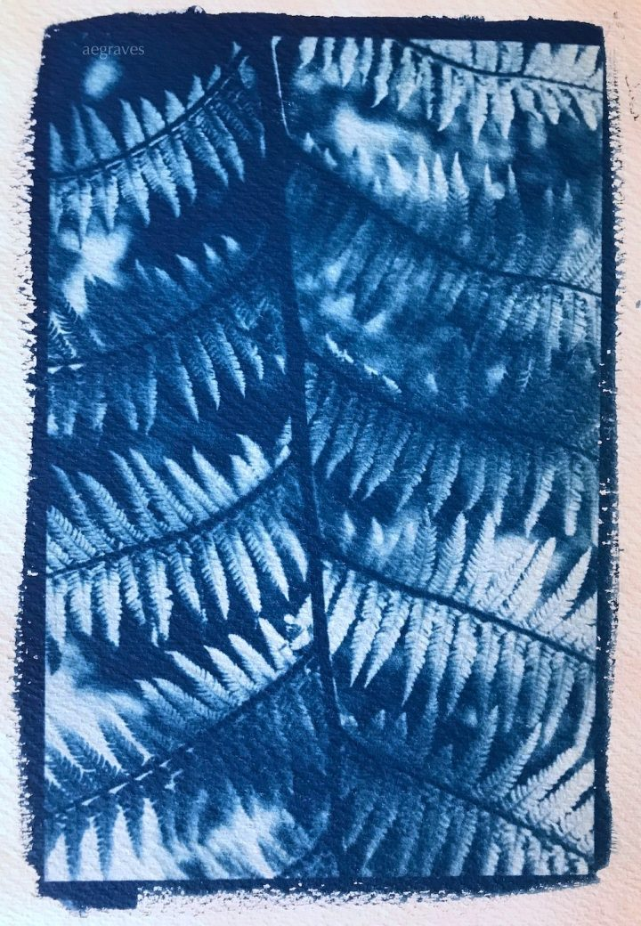 Image of cyanotype of ferns