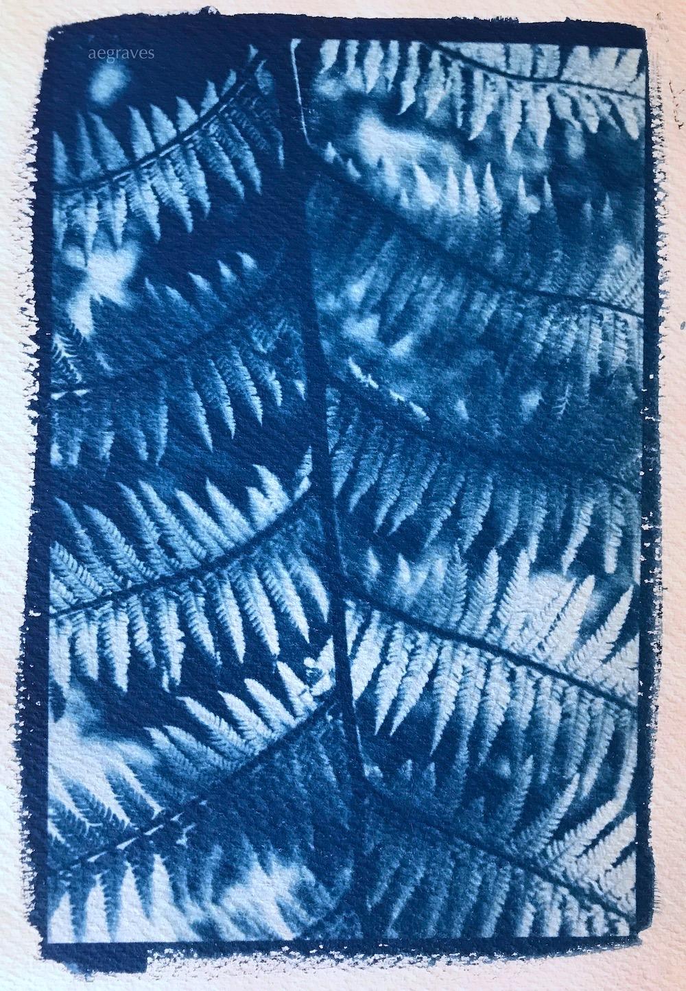 Image of cyanotype of ferns