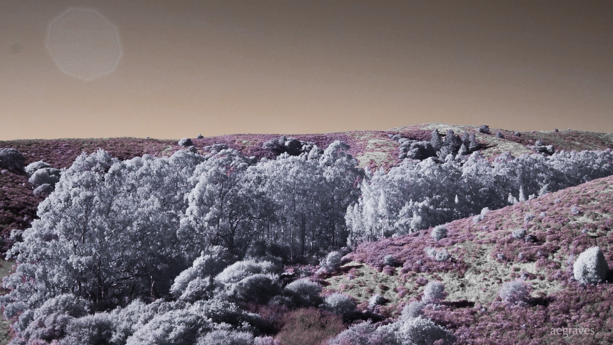 Marin infrared and pink